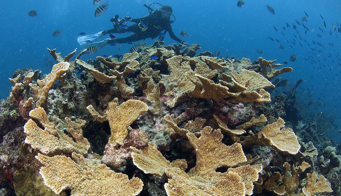 Scuba Diver Enjoys Sea Life And Coral, All Inclusive Mexican Resorts