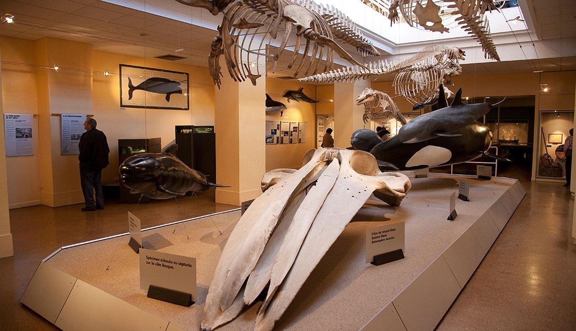 El cráneo de una ballena se muestra con otros artefactos en el Museo de la Mer en Biarritz.