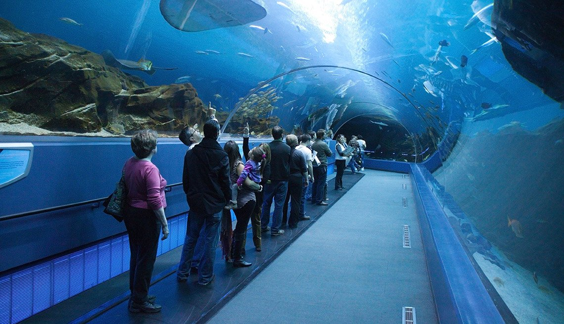 Visitors Take In The Atlanta Aquarium's Exhibits, Samantha Brown's Guide To Atlanta Georgia