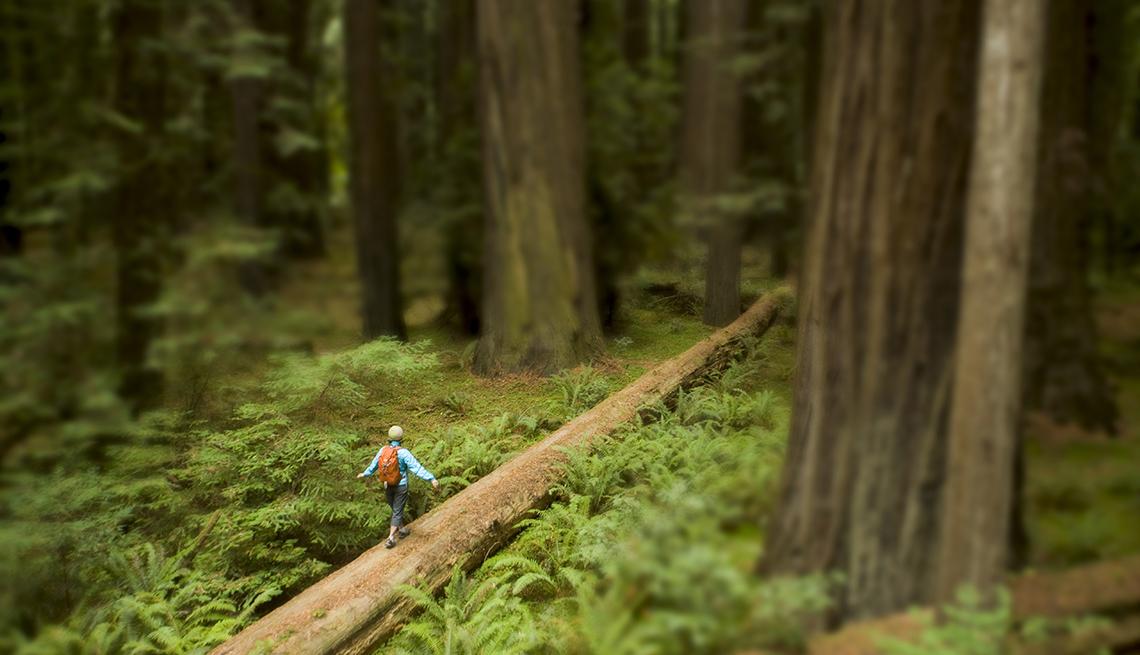 Woman Walking on Log, Coast Redwood Forest, America's Top 10 Natural Wonders