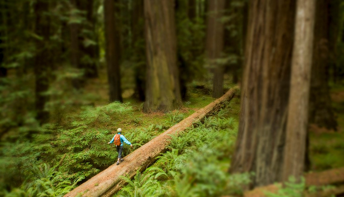 Woman Walking on Log, Coast Redwood Forest, America's Top 10 Natural Wonders