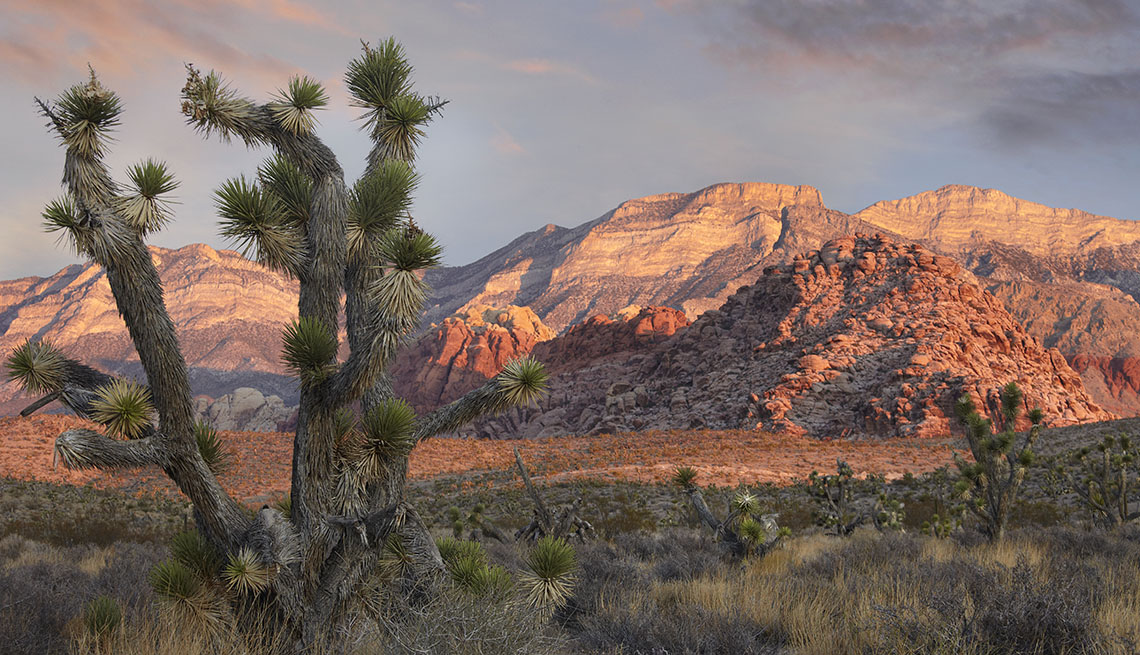 Palm Tree In The Desert With Mountains In Background In Red Rock Canyon National Conservation Area Outside Las Vegas Nevada, Las Vegas and Nearby National Parks