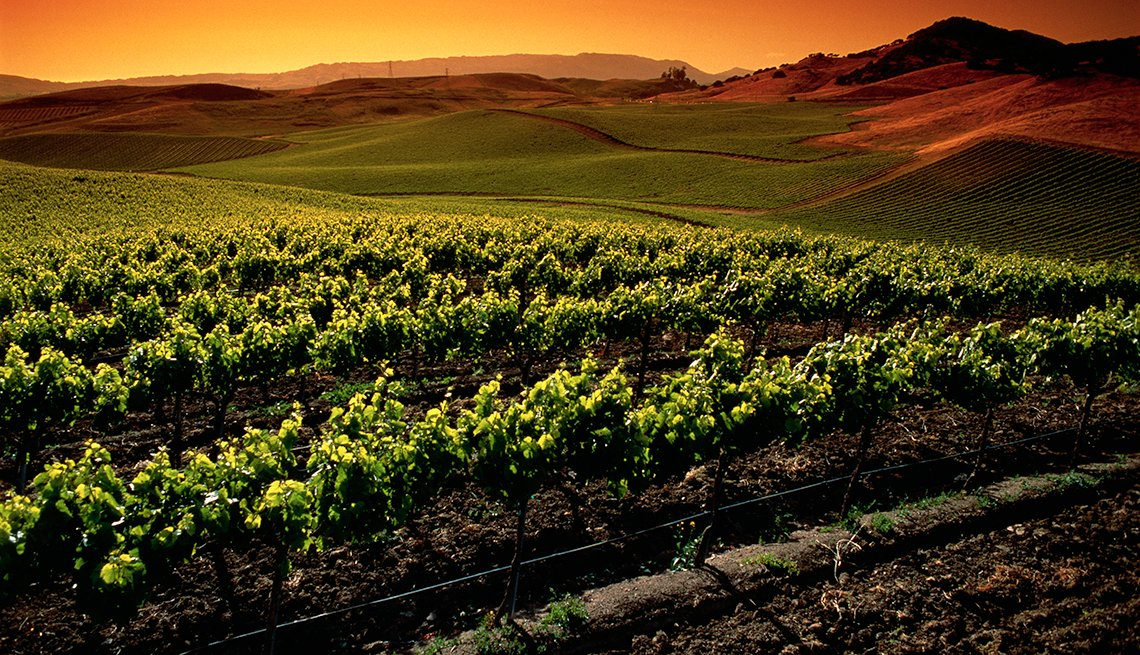 Grapevines Hills Sunset, Napa Valley Vineyards, Popular Tourist Attractions in America