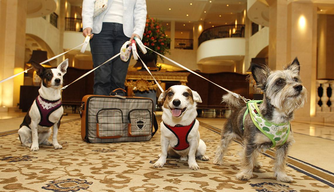 Hoteles y complejos turísticos donde consienten a las mascotas - Persona sostiene a 3 perros
