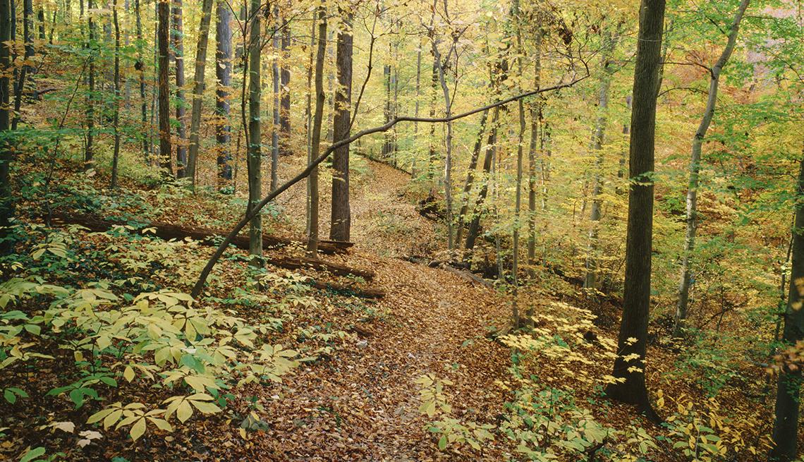 El otoño temprano colorea pequeños arcos de árboles sobre el sendero Melvin Hazen en el Parque Rock Creek, Washington, D.C.