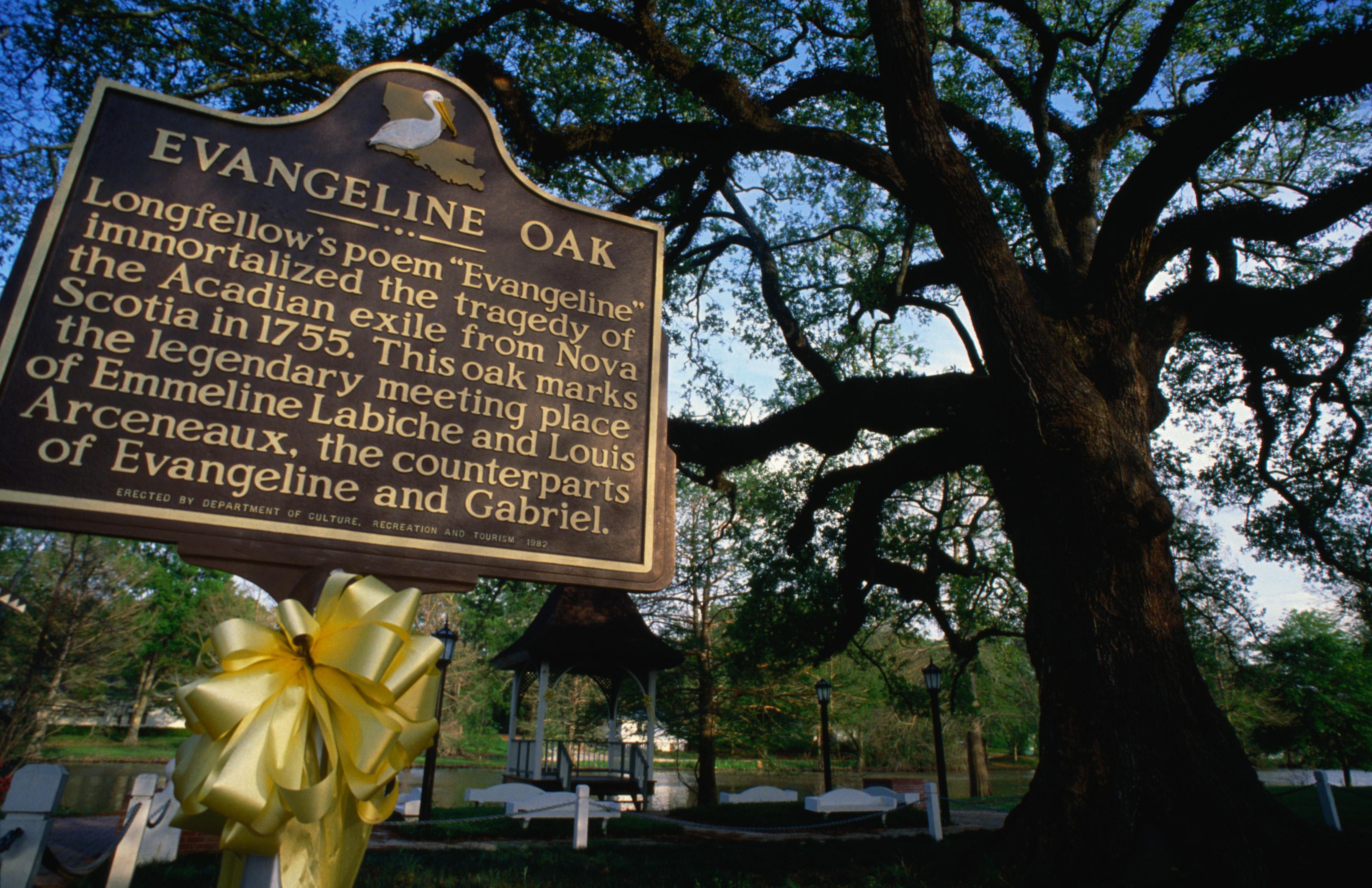 Placa conmemorativa en el Evangeline Oak.