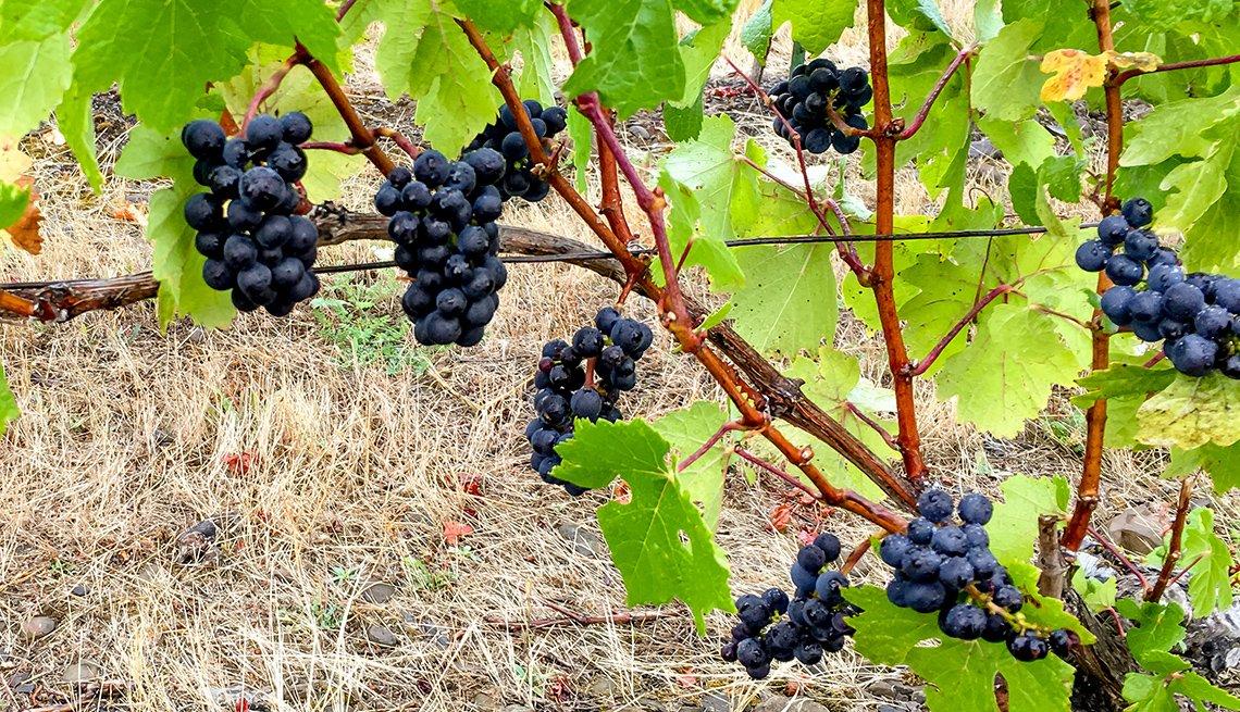 Uvas Pinot Noir.