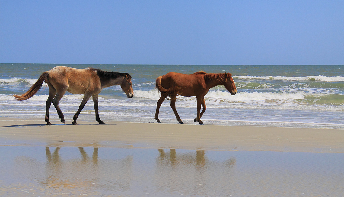 Dos caballos en la playa