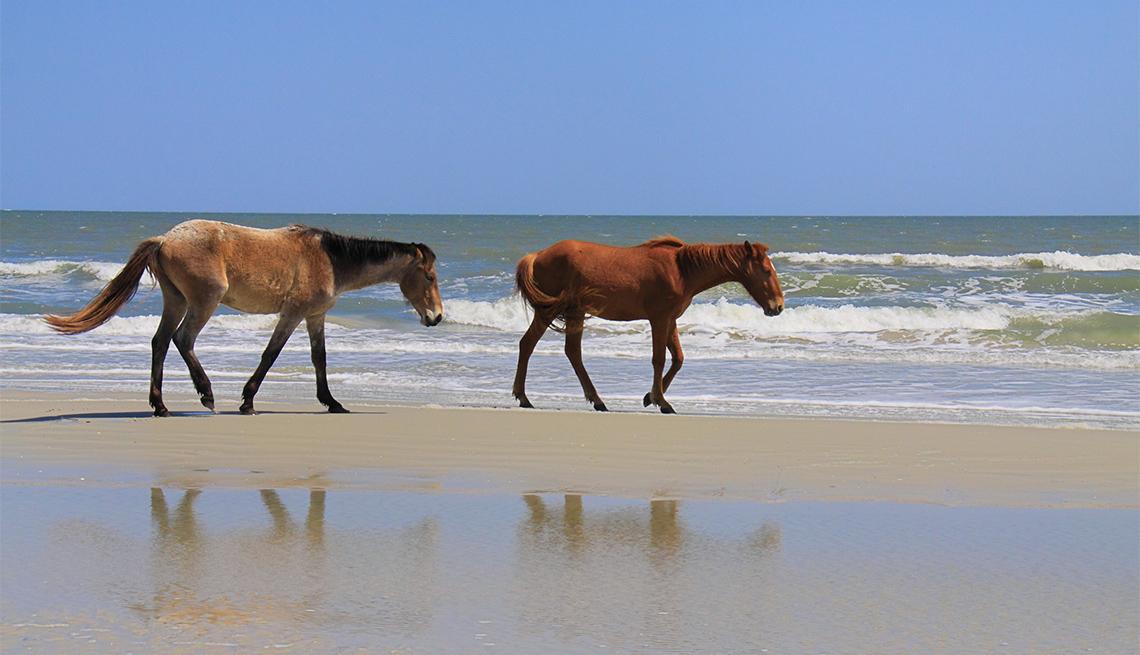 Cumberland County National Seashore