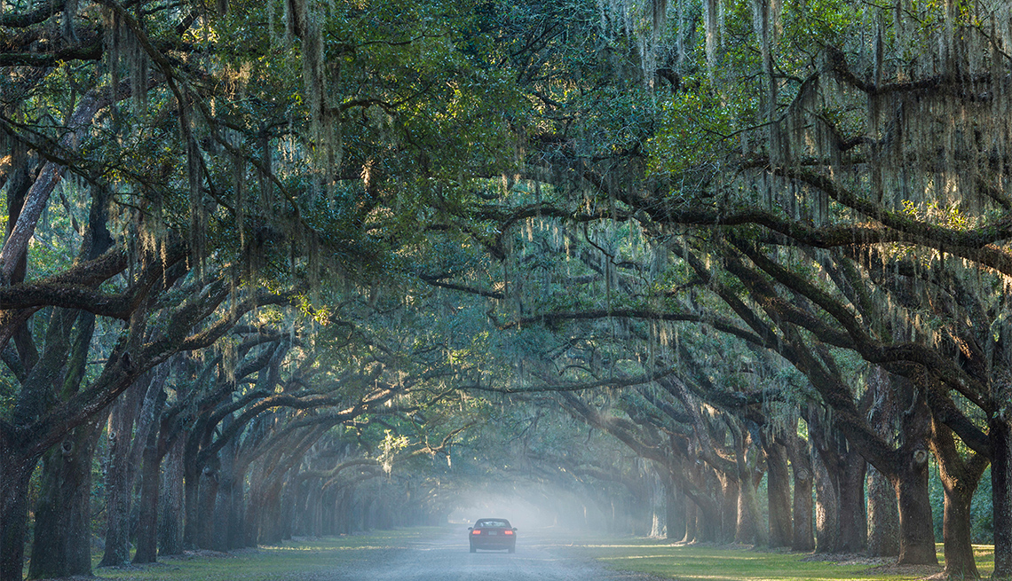 a car on a road at Wormsloe State Historic Site, Live Oak Avenue, 400 Live Oak trees line the road to the former Wormsloe Plantation