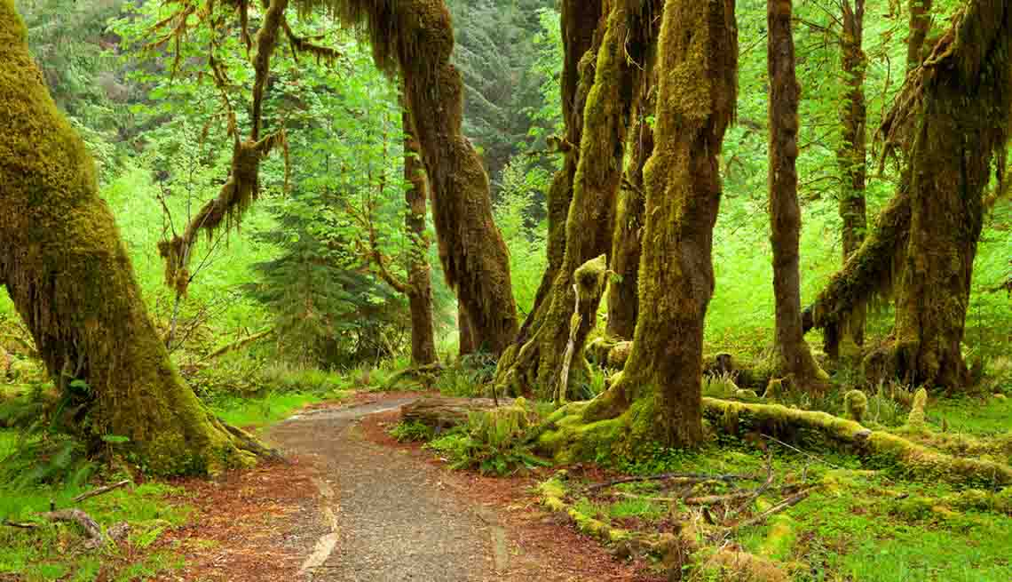10 Best National Park Hikes - Olympic