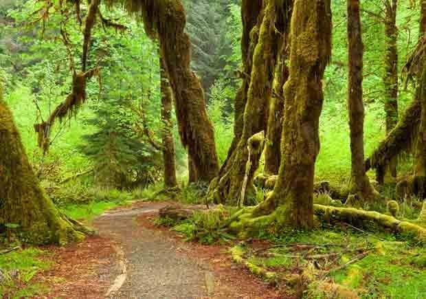 Parques con increíbles senderos para caminar - Olympic