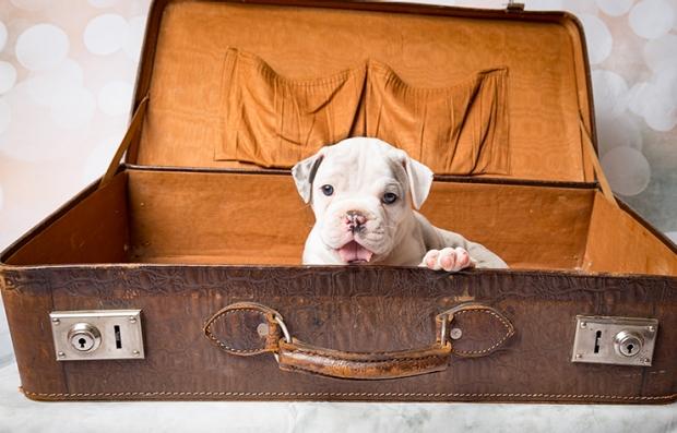 Guia para viajar en avión con una mascota