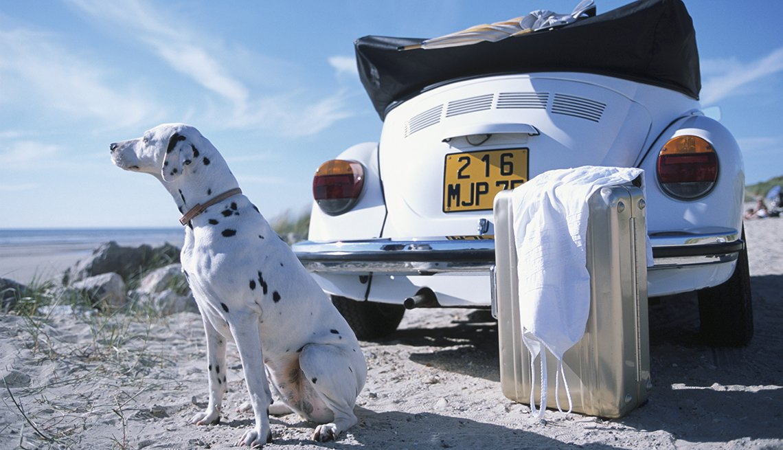 Dalmatian on Sand by Beach, Suitcase Behind White VW Convertible, How to Travel With Your Pet