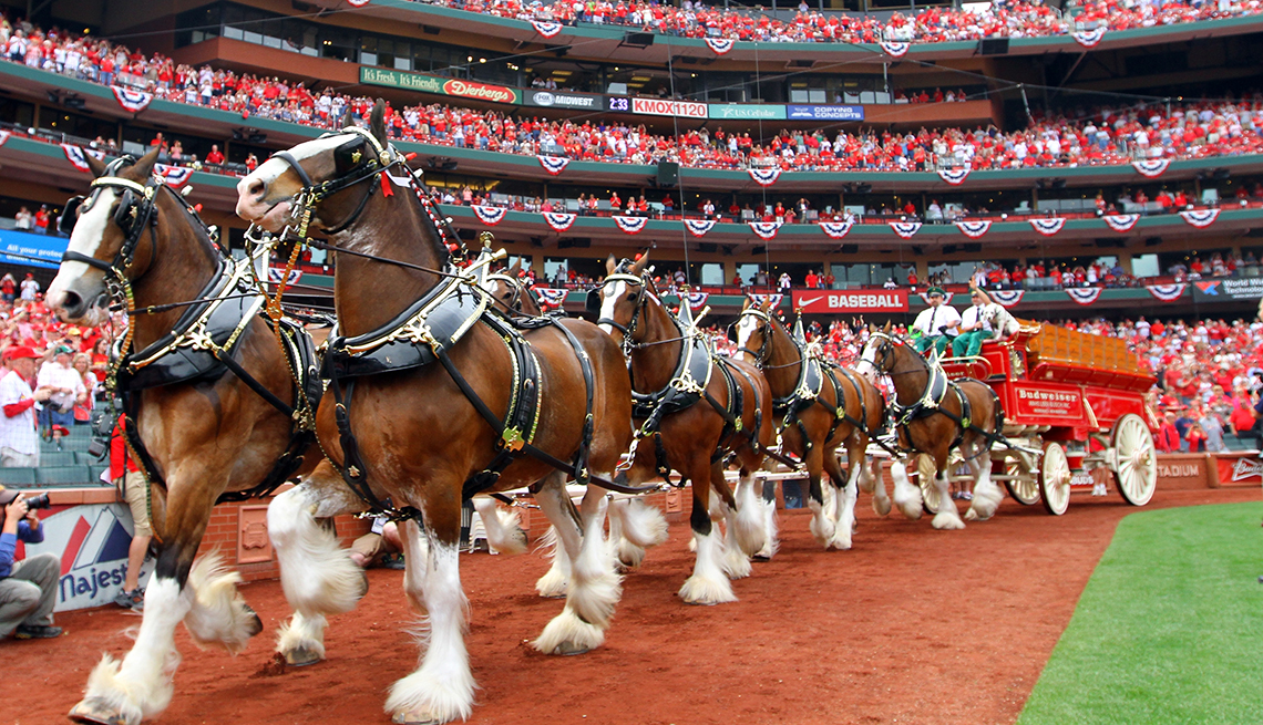 Budweiser Clydesdales, Busch Stadium, St. Louis, Great Places for a Multigenerational Vacation