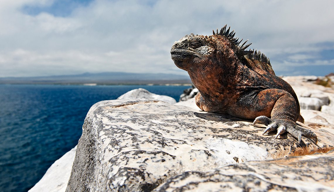 Iguana on Rock, Ocean, Galapagos, Great All-Inclusive Vacations