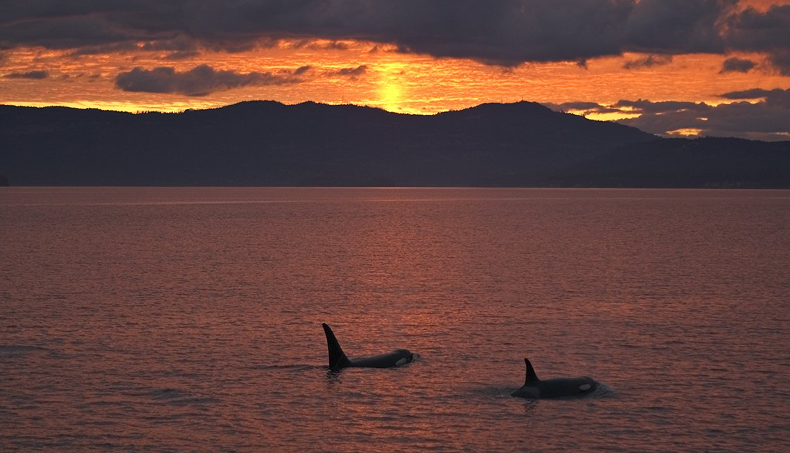 Orcas, San Juan Islands, Sunset, Great Places to Go This Summer