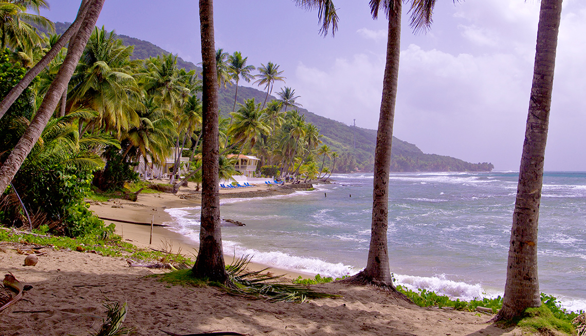 item 12 of Gallery image - Palm Trees And Sand In Puerto Rico, Best Road Trips