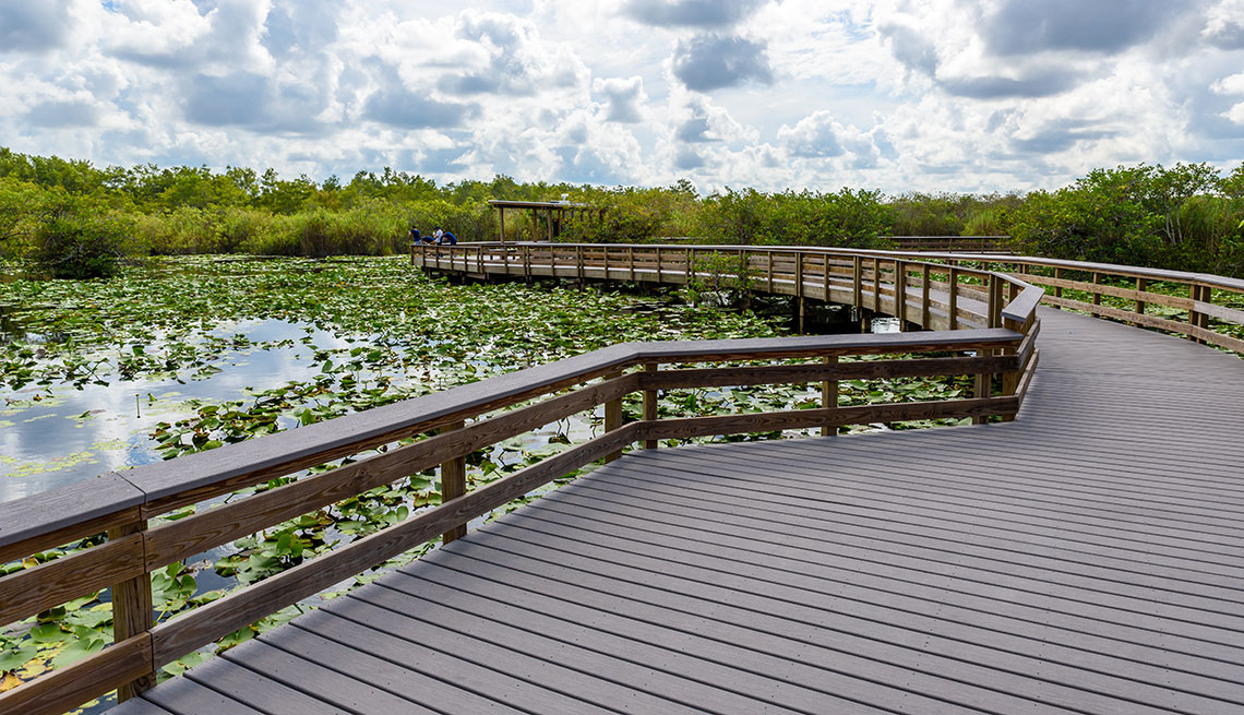 Anhinga Trail of the Everglades National Park. Boardwalks in the swamp..