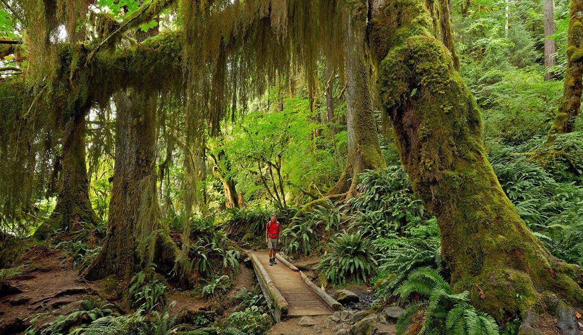 Excursionista en el sendero Hoh River en el puente Mineral Creek en el área de Hoh Rain Forest del Parque Nacional Olympic.