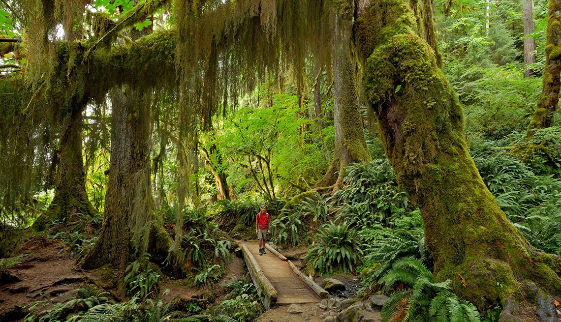 Hiker on the Hoh River trail
