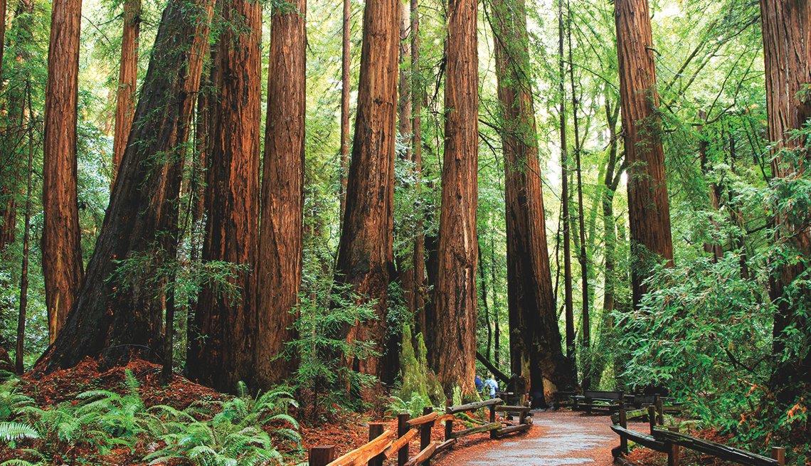 Bosque Muir Woods