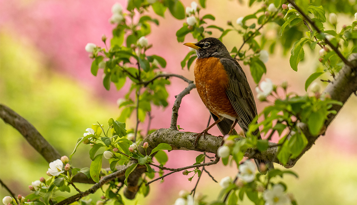 item 7 of Gallery image - Robin at Central Park Conservancy