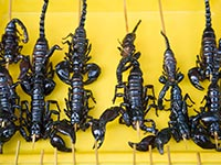 Fried scorpions on a stick, 10 things never to eat on vacation