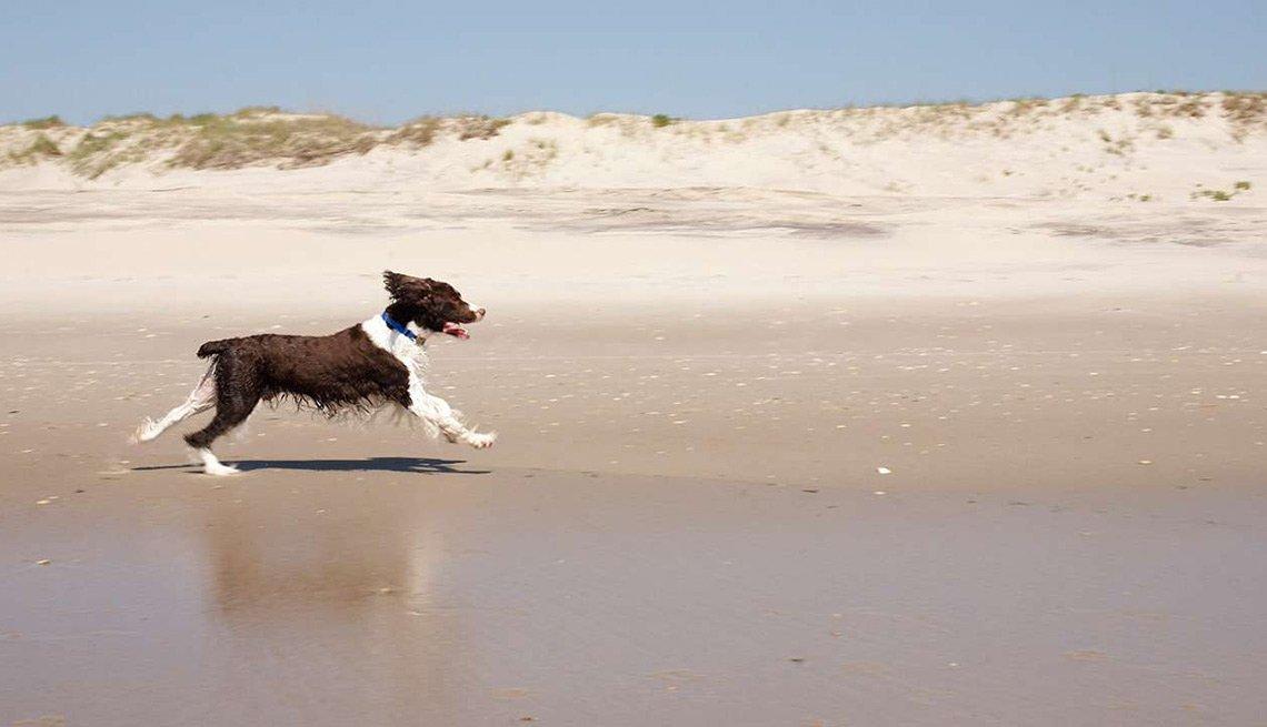 Playas atractivas en el mundo - Ocracoke Island, Carolina del Norte