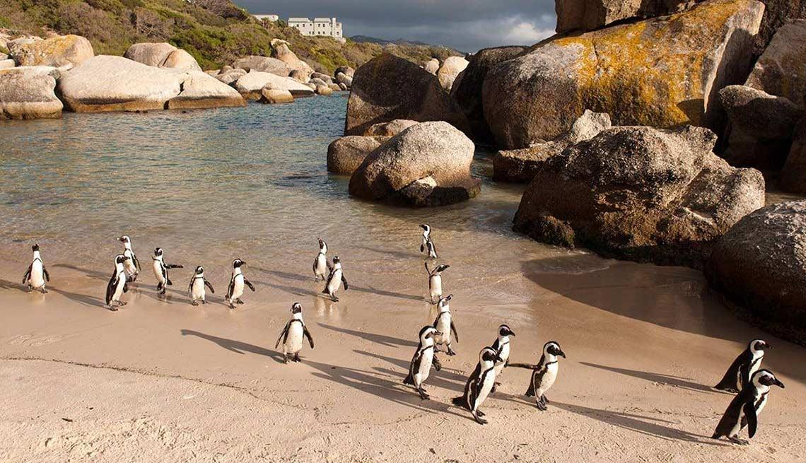 Playas atractivas en el mundo - Boulders beach, Cape Town, Sudafrica