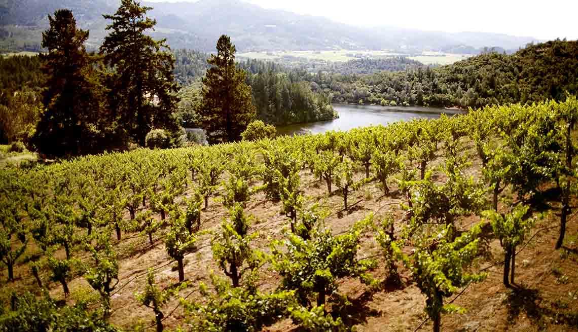 Viñedo en el valle de Sonoma, California