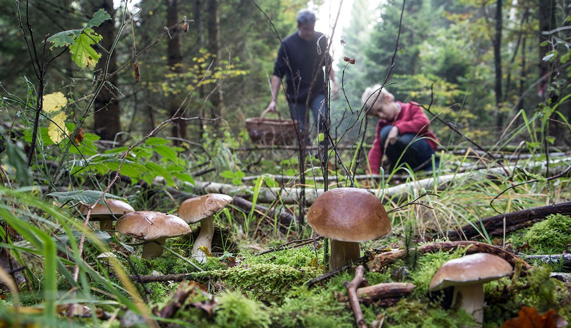 Wild Mushrooms Grow In The Forest With Adventurous Foragers In The Background, Unique Fall Vacation Destinations