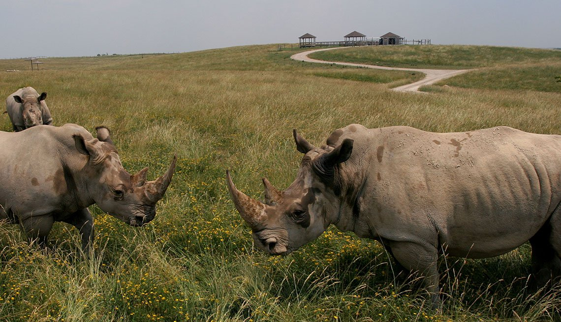 A Trio Of Rhinoceros In A Field, Unique Summer Vacation Ideas