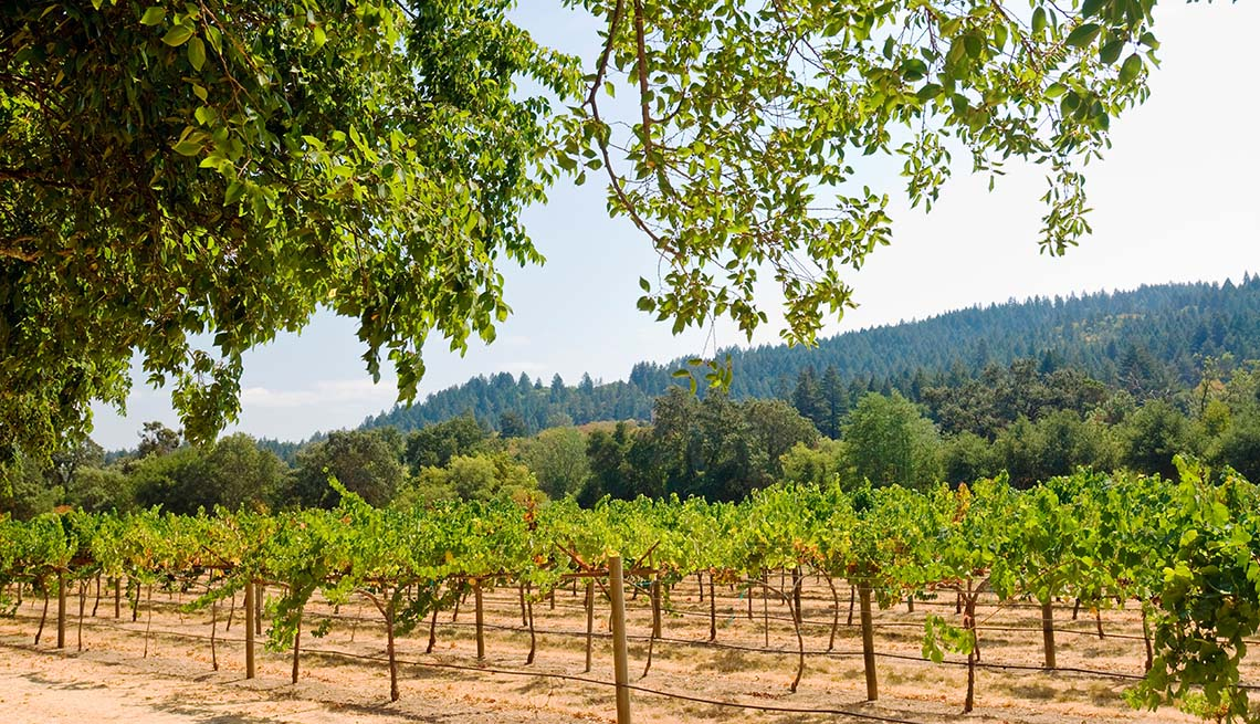 item 8 of Gallery image - Vineyard And Mountain In Background In Napa Valley California, Unique Fall Vacation Destinations