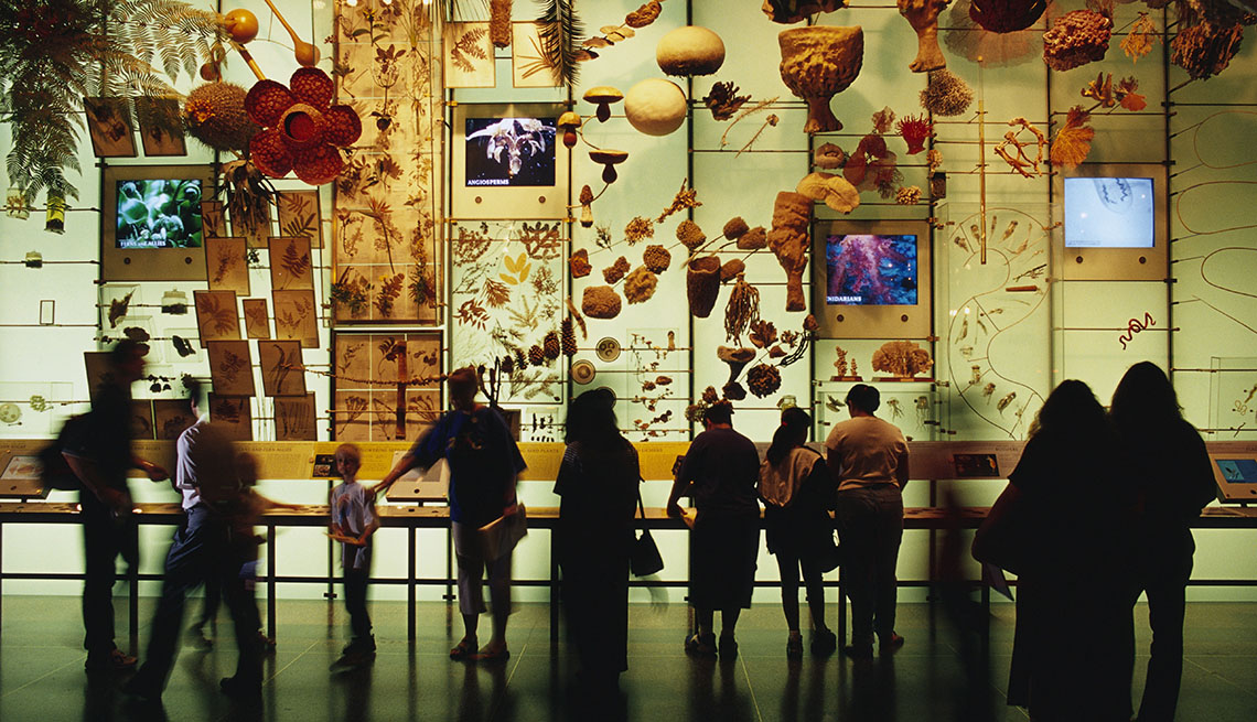 Natural History Museum New York Free Friday