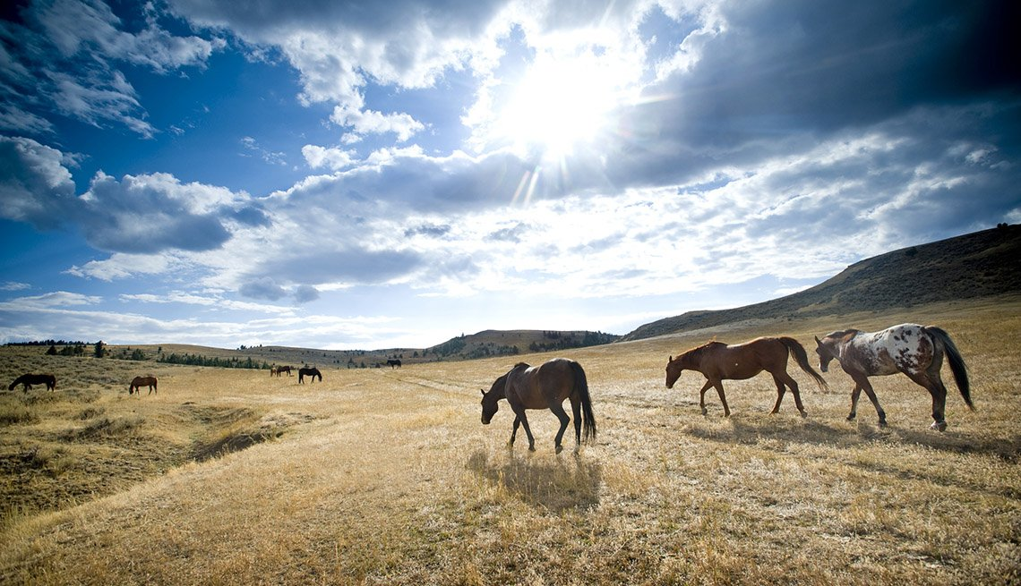 Horses Run Free In Bozeman Montana, College Towns To Visit