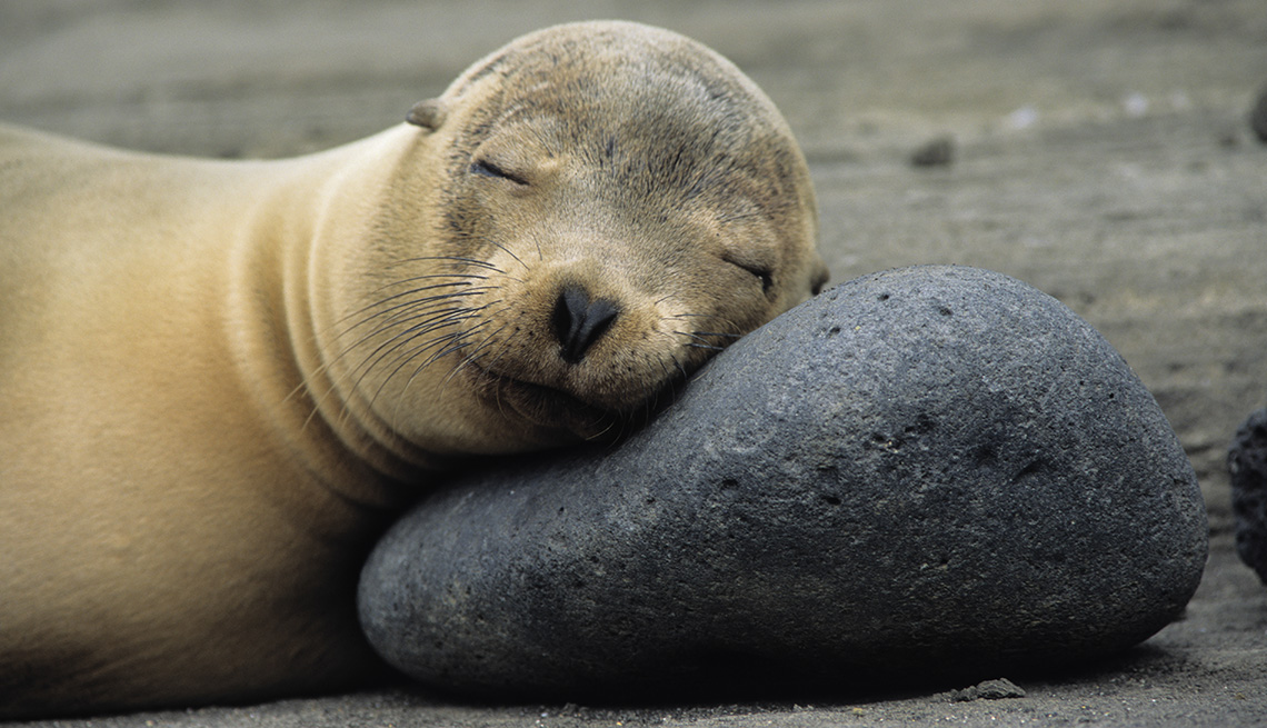 A Sea Lion Rests Its Head On A Rock On The Beach At Galapagos Island In Ecuador, Unique Vacation Ideas