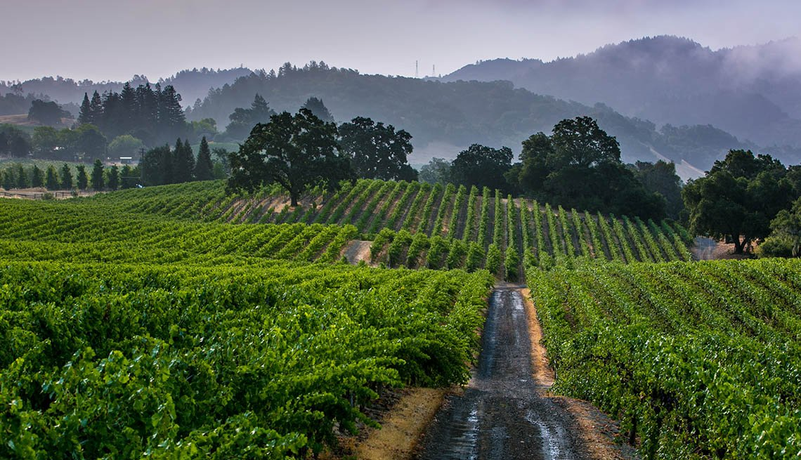 Vineyards In Healdsburg California, Second Honeymoon Destinations
