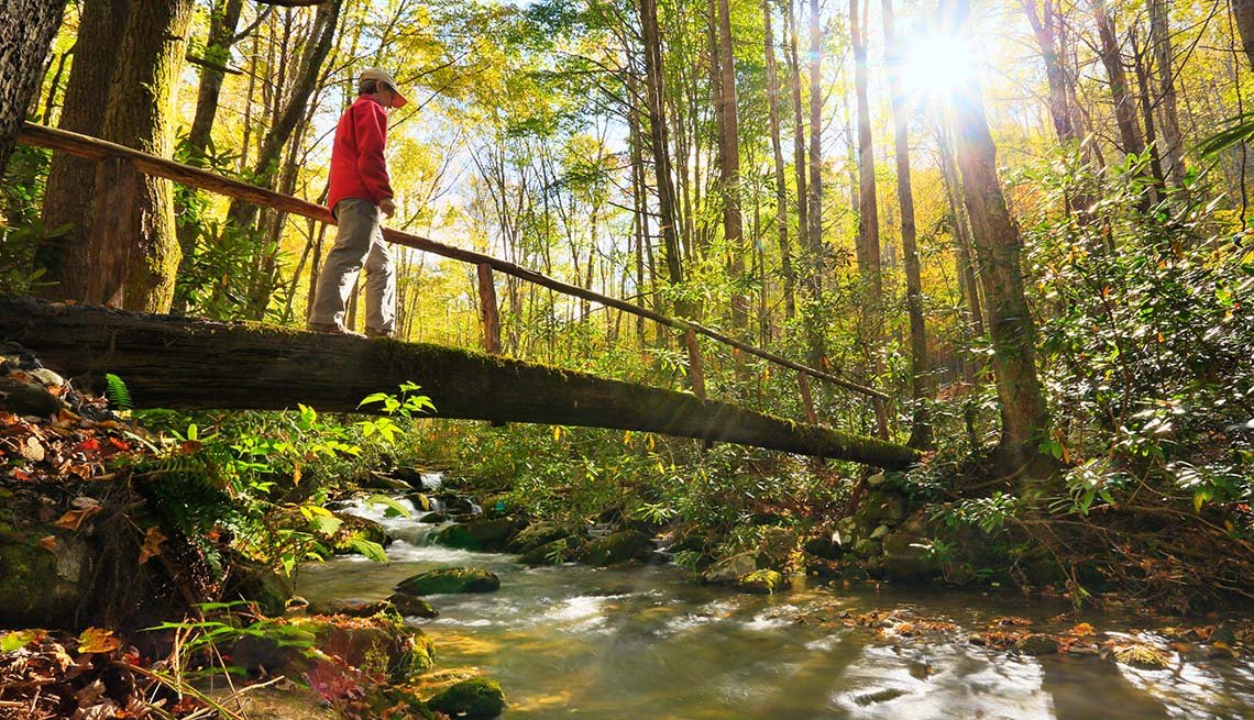 Lone Hiker In The Woods Of Tennessee, Wellness Vacations