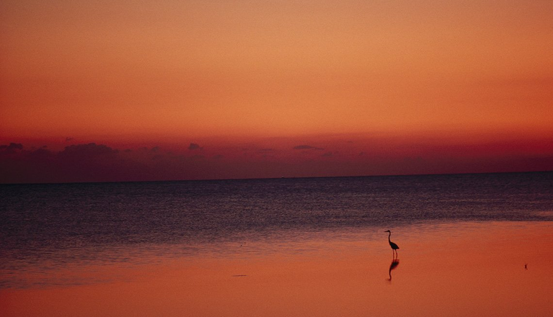 Lone Bird On Beach In Key West Florida At Sunset, Best Sunsets
