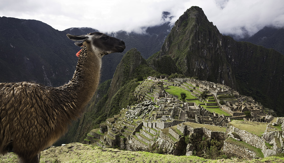 A Llama In The Foreground In Front Of Machu Picchu In Peru, How To Choose A Guided Tour