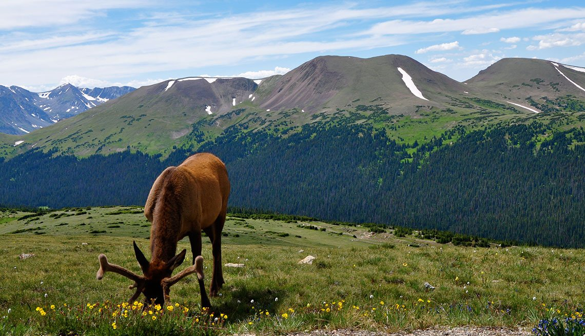 Elk Grazing In Estes Park In Rocky Mountains In Colorado, Affordable Spring Break Vacations