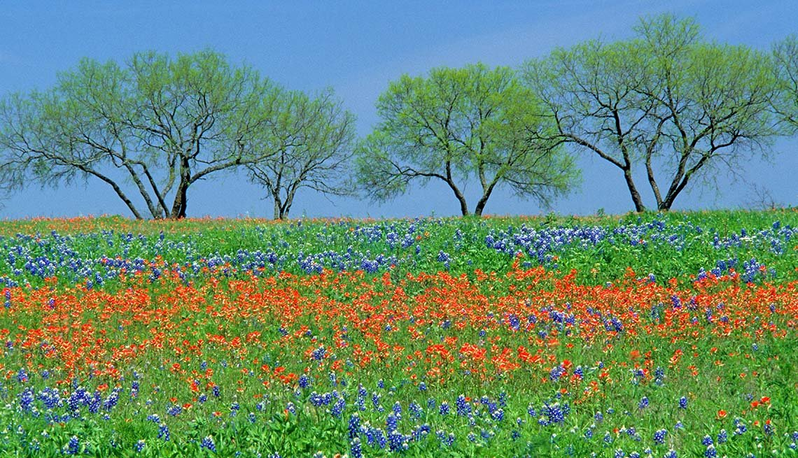 Colorful Spring Flowers In Texas Hill Country, Affordable Spring Break Vacations