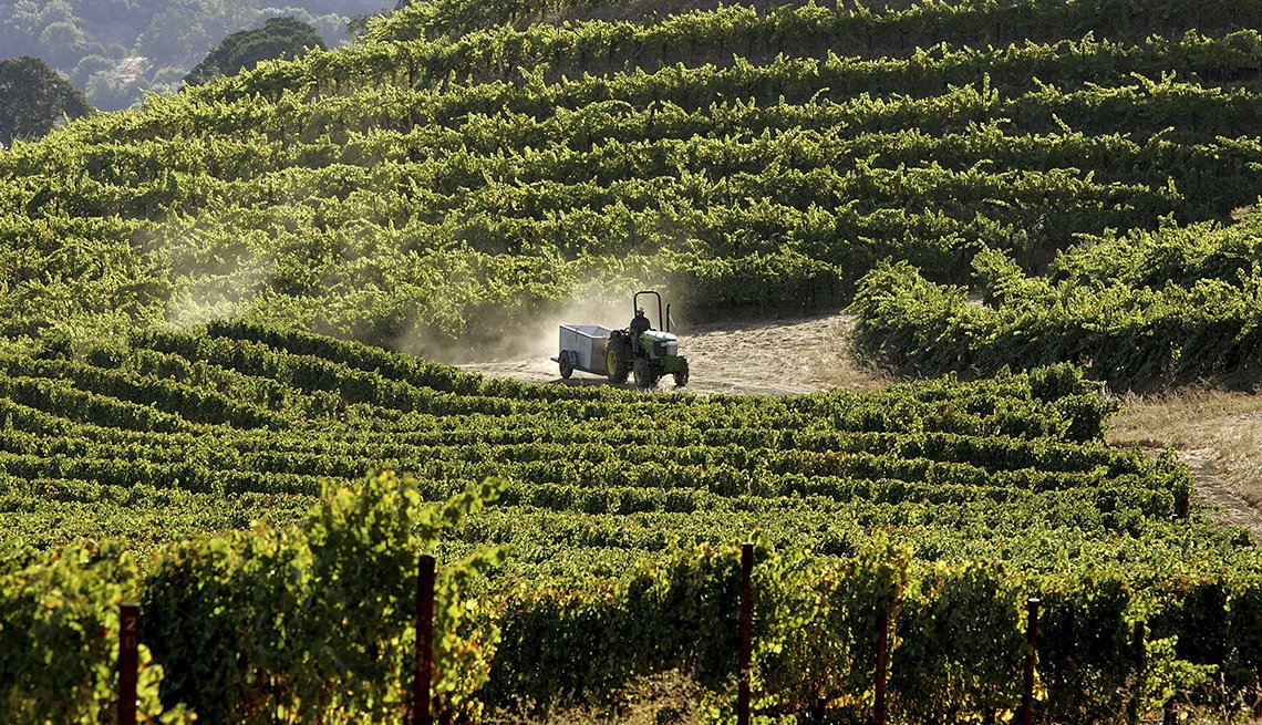 Man Works The Vineyards In California, Scenic Railways