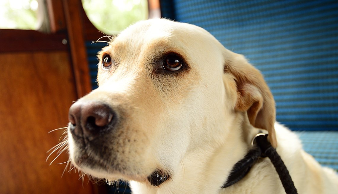 Close up of a dog on train.