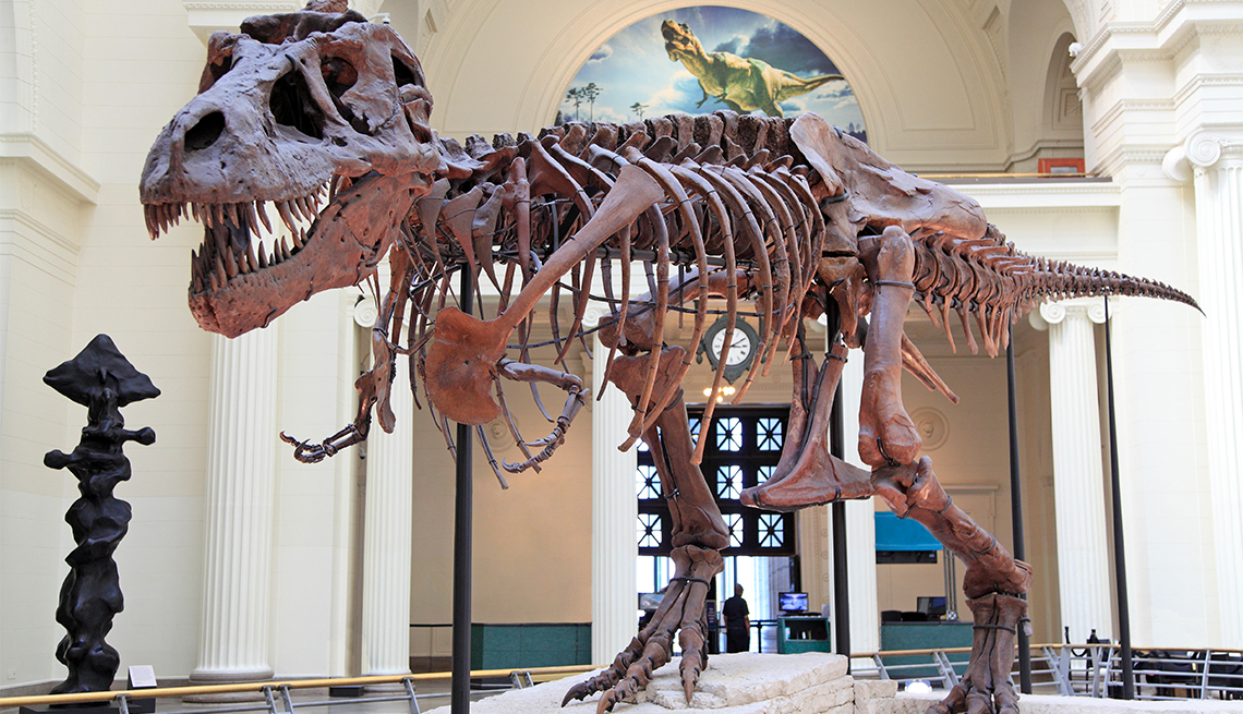 Esqueleto de tiranosaurio (T-Rex) en el Field Museum de Chicago.