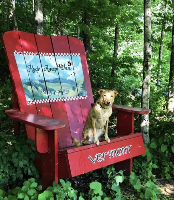 Leo sitting on a large chair in Vermont