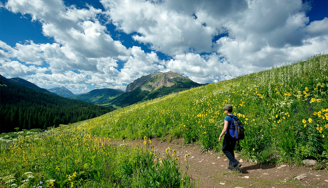 Wildflowers, hiker on Trail No. 401 and Gothic Mountain (12,631 ft.), Gunnison National Forest, near Crested Butte, Colorado