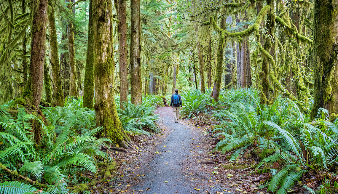 item 3 of Gallery image - hiker on the Marymere trail in Olympic National Park