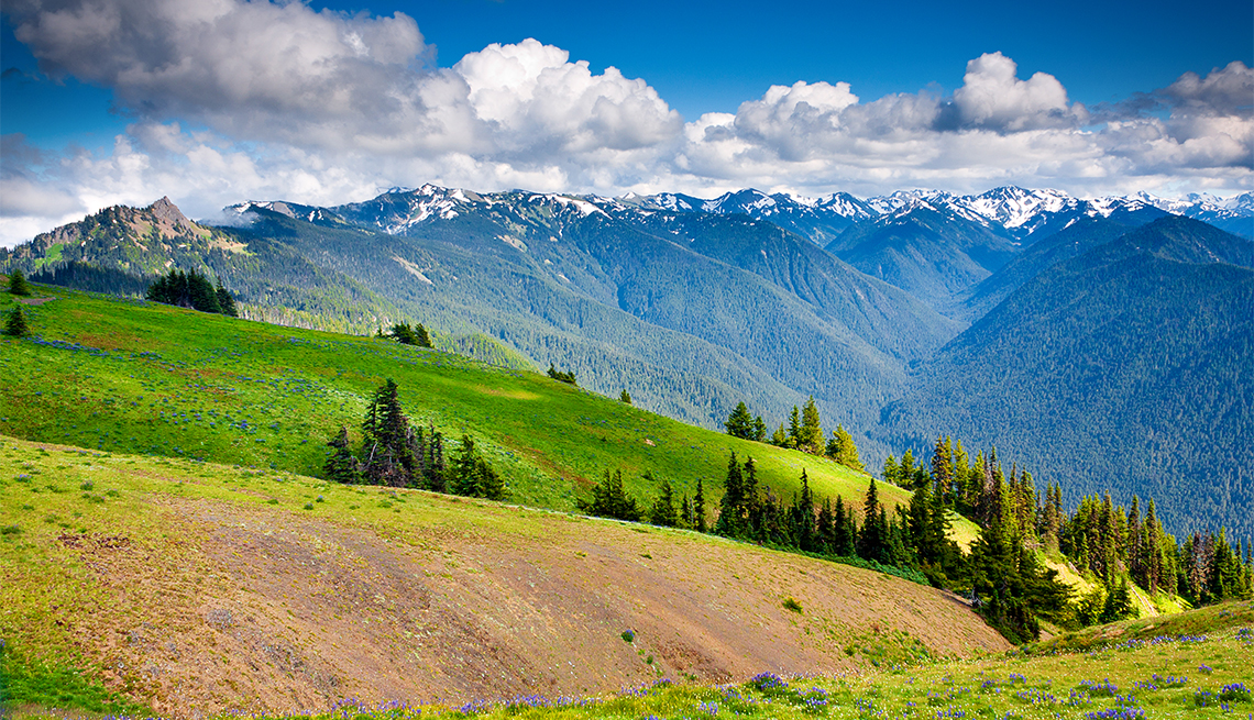 hillside meadows at Hurricane Ridge section of Olympic National Park with snowcapped mountains in distance on partly cloudy afternoon